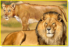 Visit the Lions in the ABCmouse.com Zoo
